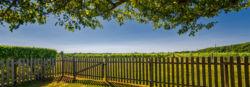 Borghese North Fork Vineyard